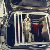 Ford Focus Wagon, sicurezza a quattro zampe