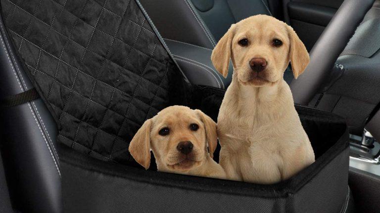 Seggiolino per trasporto animali domestici in auto